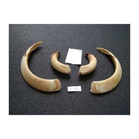 Trofeo corzo de pecho en peana tallada